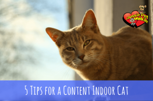 5 Tips For A Content Indoor Cat
