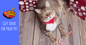 gift ideas for your pet 2019
