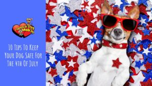 10 Tips To Keep Your Dog Safe For The 4th Of July